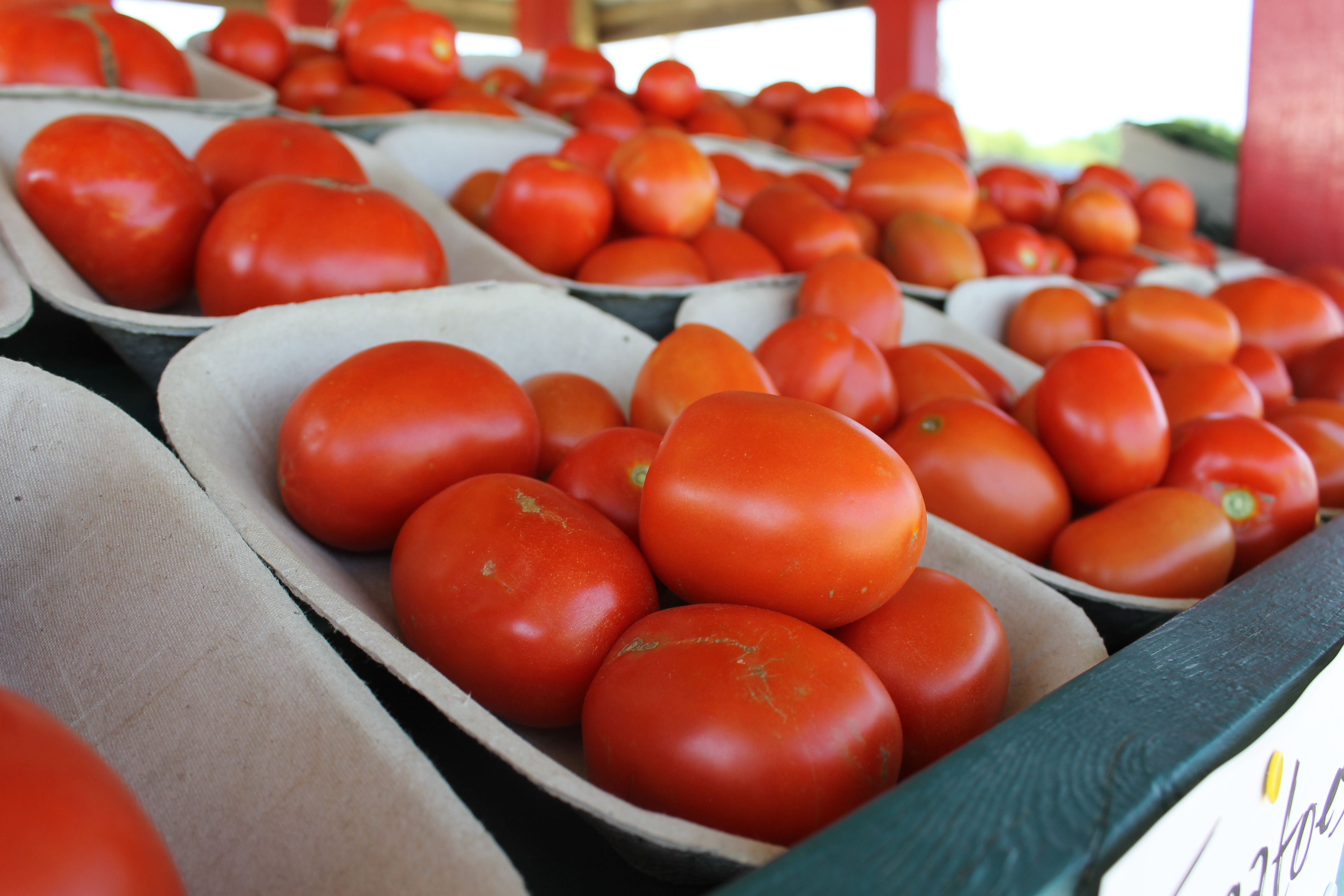 Tomatoes at Costa Farm