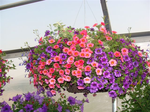 flowers-and-pots-08-023