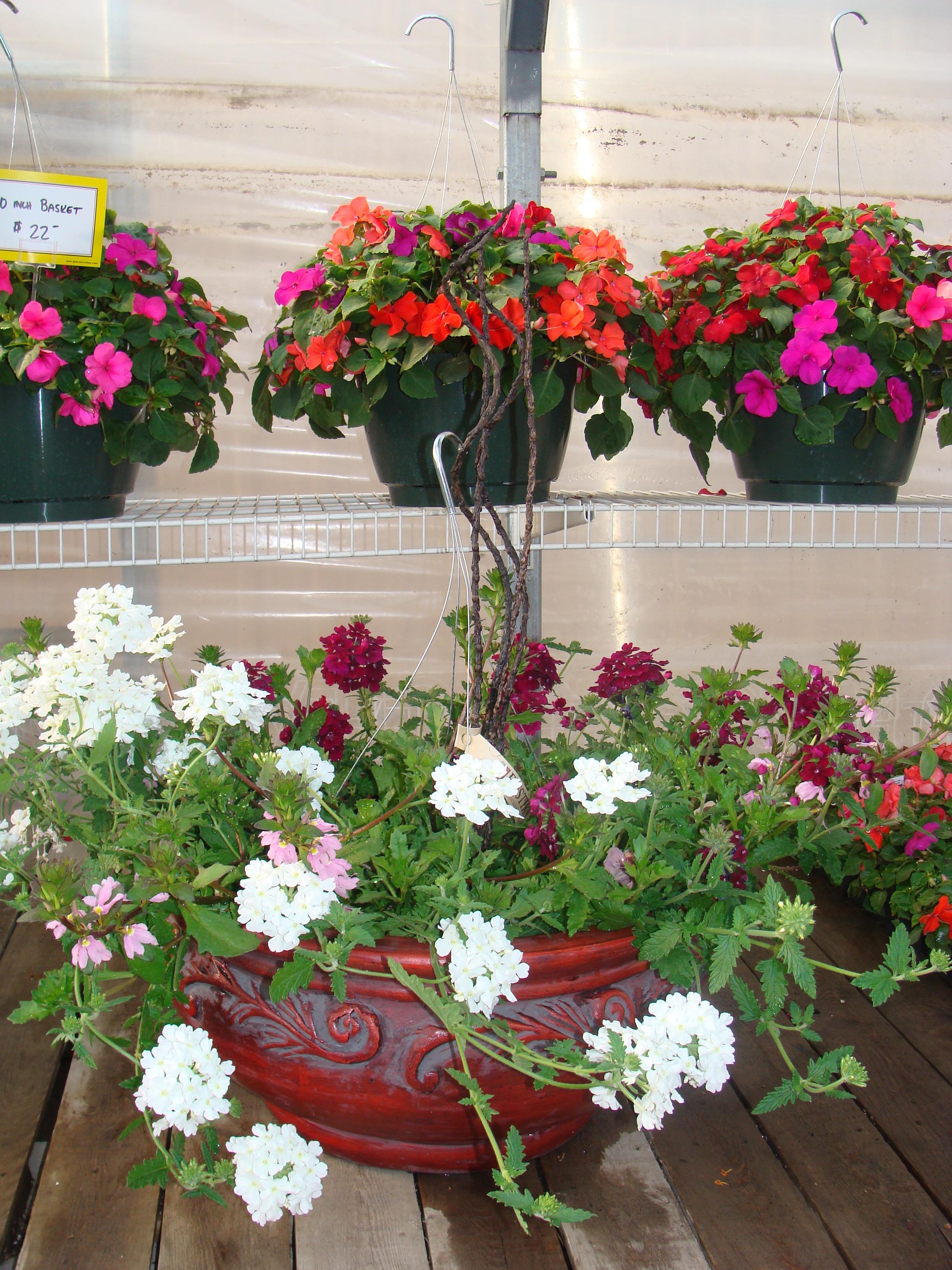 flowers&pots 08 031